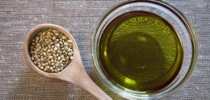 konoplja ulje konoplja semena cannabis sativa, omega 6,omega 3 masne kiseline, gama linoleinska kiselina, stearidonska kiselina,polinezasićene masne kiseline